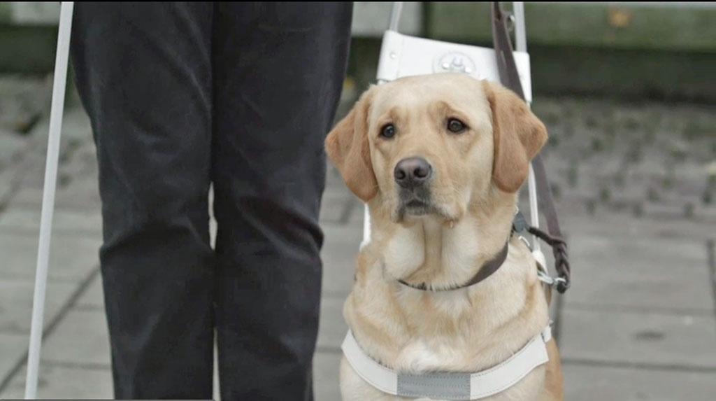Når førerhunden har selen på er den på jobb