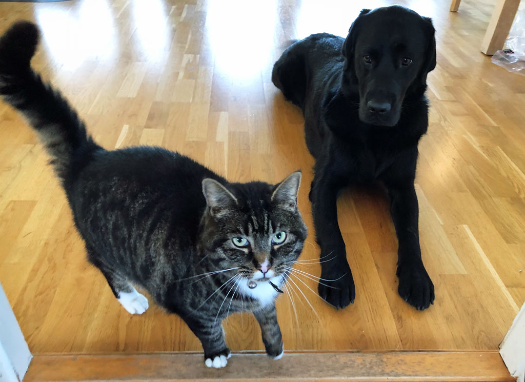 Katt og hund