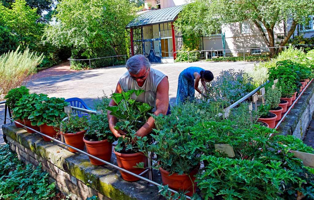 Botanisk hage for blinde, Radeberg, Tyskland. To personer luker og stelelr planter i hagen.